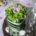 sushi specchio lilla verde - centrotavola Fioristeria Clerici Solbiate Arno